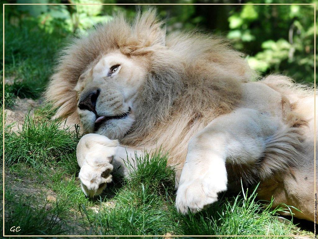 Schl sser wein und wilde tiere visionsblog info for Appart hotel zoo de beauval